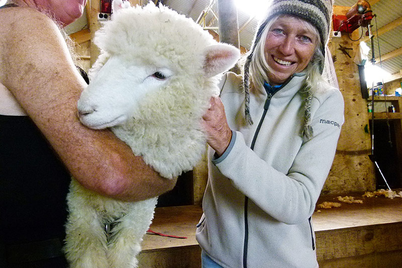 Meeting the locals, South Island, New Zealand © Black Sheep Touring Co.